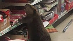 Beaver Who Ravaged Dollar Store Christmas Decorations Is All Of
