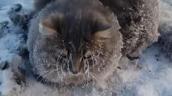 Así se rescata a un gatito cuando se queda congelado y pegado en el