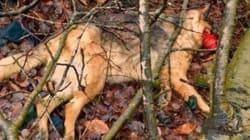 Des cas de cruauté animale préoccupants dans les