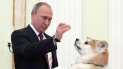 プーチン大統領、愛犬「ゆめ」にメロメロ【画像集】
