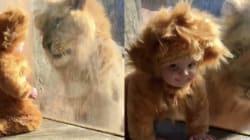 El encuentro más tierno del zoológico: un bebé y un león se