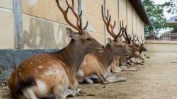Nara, la ciudad tomada por los ciervos