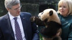 Panda Pair Will Be Loaned To