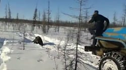 Horrifying Video Shows Russians Crushing Bear To Death With