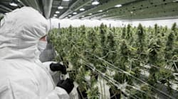 Contamination Scandals Send Big Pot's Moral Argument Up In