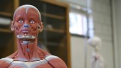Los científicos identifican un nuevo órgano en el cuerpo humano: el