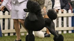 Canadian Canine Stands Tall At 'America's Dog