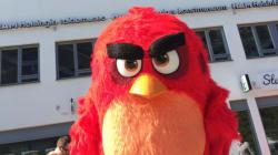 Real-Life Angry Bird Attack Seriously Injures Toronto