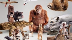La BBC fabrique 30 robots-animaux pour filmer de plus près les animaux