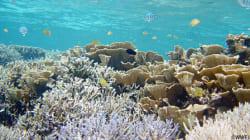 2016年のサンゴ礁の大規模白化とその後