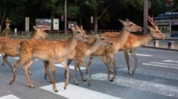Des photos magiques d'une ville japonaise envahie par des