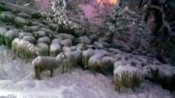 La strage di animali è molto più pesante: 3mila stalle