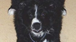 3 Weeks After Car Rollover, Lost Alberta Dog