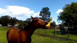 Um cavalo. Uma galinha de borracha. E o real significado de