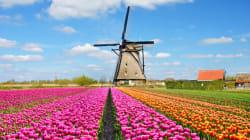 L'Olanda è il primo Paese al mondo in cui i treni sono alimentati al 100% con il