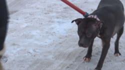 Un homme mordu au visage par son chien à
