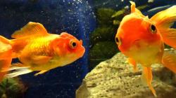 「恐怖で頭がいっぱいに」虐待で金魚を食べさせられた少女