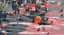 フェロー諸島の捕鯨 虐殺か文化か?