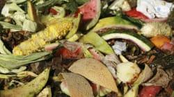 13 miliardi di cibo all'anno finiscono nel cestino degli