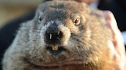 Digging Deep Into The History of Groundhog
