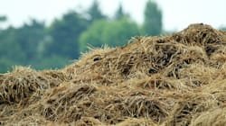 Farmer Defends Himself In The Great Dung Battle Of New