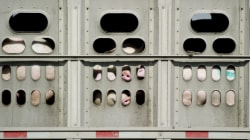 18 Ways We Can Strengthen Canada's Animal Transport