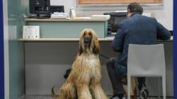 Nasce mutua per cani e gatti: costerà 120 euro