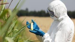 Con il Ceta su Ogm e pesticidi si deciderà in