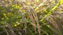 「水田」を「大規模放牧地」に変える「福島県飯舘村」の農家の挑戦--寺島英弥
