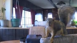 Pet Squirrel Stops Burglary By Scratching The Crap Out Of