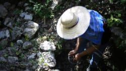 Découverte au Mexique de micro-organismes qui pourraient avoir 60 000
