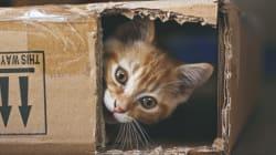 Les chats, aussi populaires sur le web que dans nos