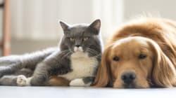 Plus de 35 000 chiens et 8000 chats enregistrés à