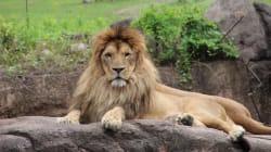 Un zoo perd sa licence: près de 500 animaux y sont morts en 4