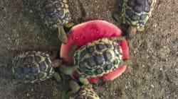 Cette tortue ne veut vraiment pas partager sa