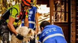 Terremoto centro Italia, la voce inascoltata dei suoi