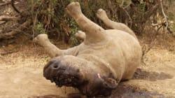 Quatre employés du Parc Kruger, en Afrique du Sud, arrêtés pour
