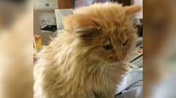 RCMP Saved This Nearly Frozen Kitten From A Saskatchewan
