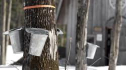 Les changements climatiques ont un impact sur la production de sirop