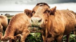 Meno carne e latticini, sì a biologico e km 0. Guida a un'alimentazione amica