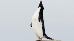 南極基地の日常とは?