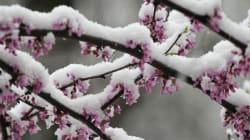C'est le printemps! Mais il s'installera