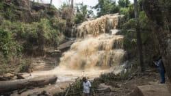 Un arbre tombe sur la foule au Ghana, faisant au moins 19