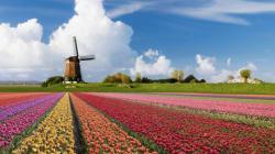 Des tulipes contre le populisme: guide de