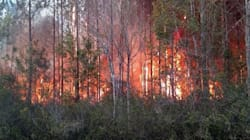 Florida Book Burning Ignites Wildfire, Destroys