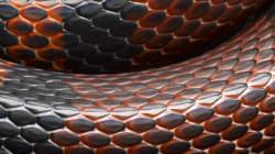 Décès de 33 reptiles au zoo de