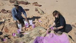 World's Largest Dinosaur Tracks Found In Australia's 'Jurassic