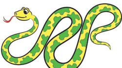 全長7メートルのニシキヘビに、男性が丸のみにされる