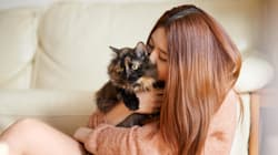 Think Your Partner Loves The Cat More Than You? You're