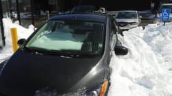 Poor Newfoundlander Left Windows Open Before Leaving On